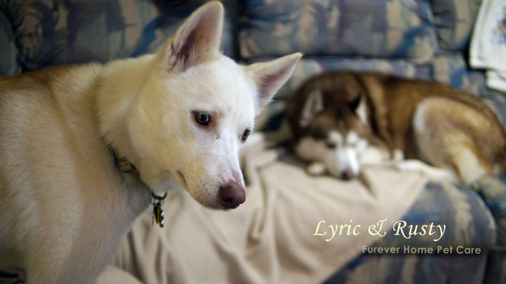 husky home care