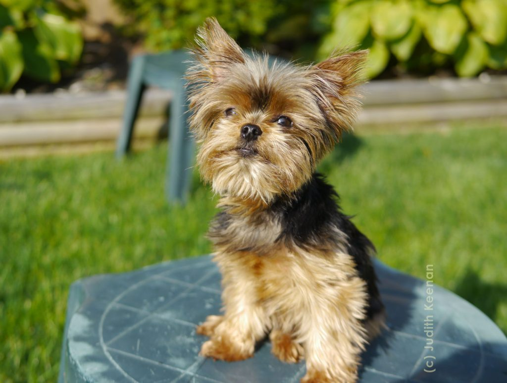 small dog boarding