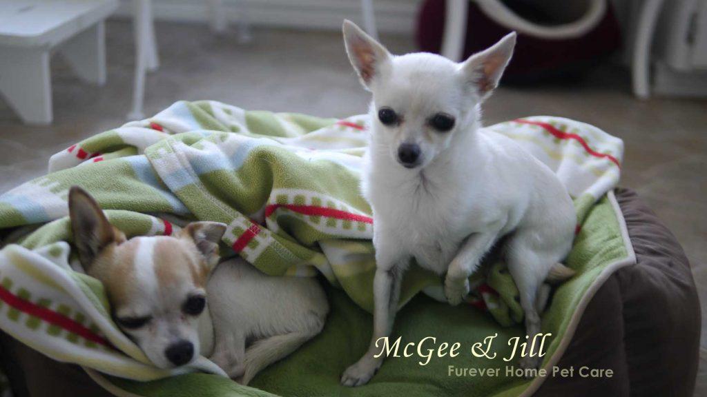 dog day care cuddles