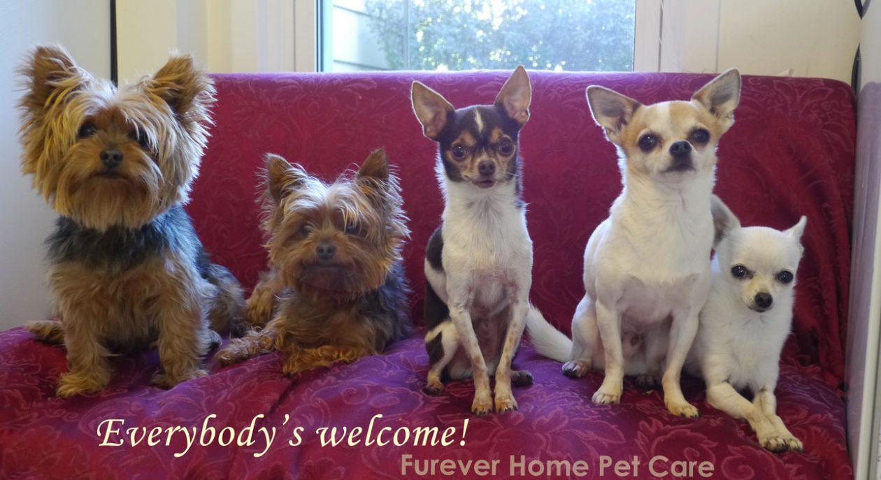 Furever Pet Care