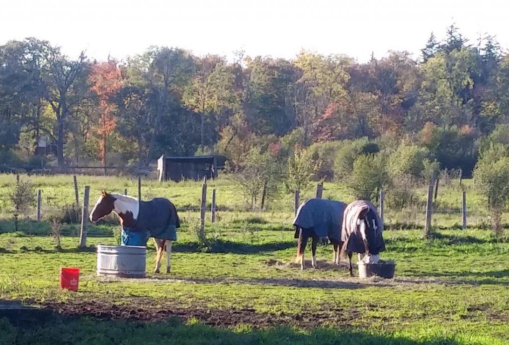 horse petsitting farm care