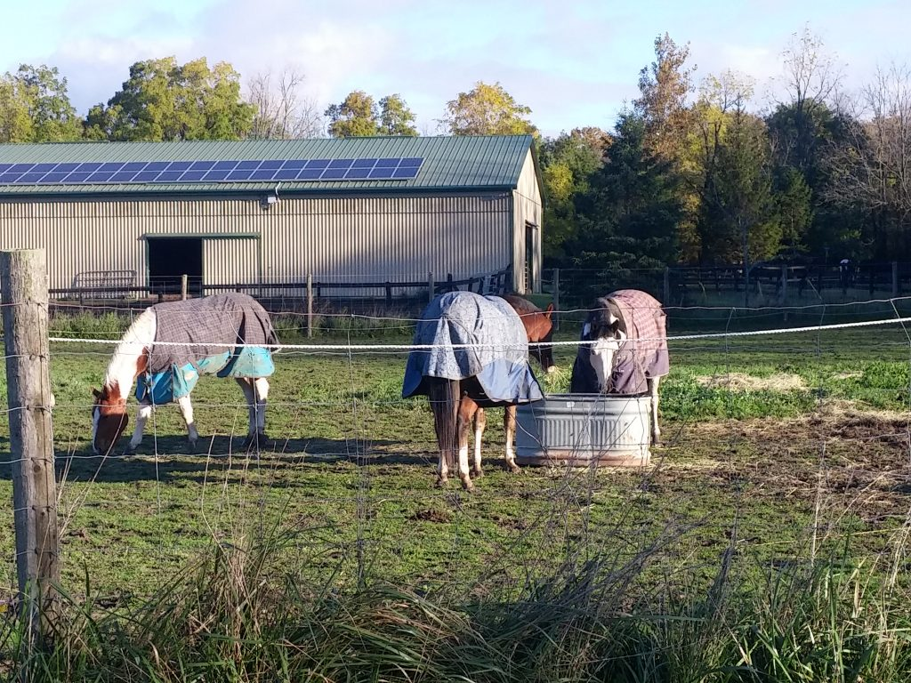 horse care at the farm