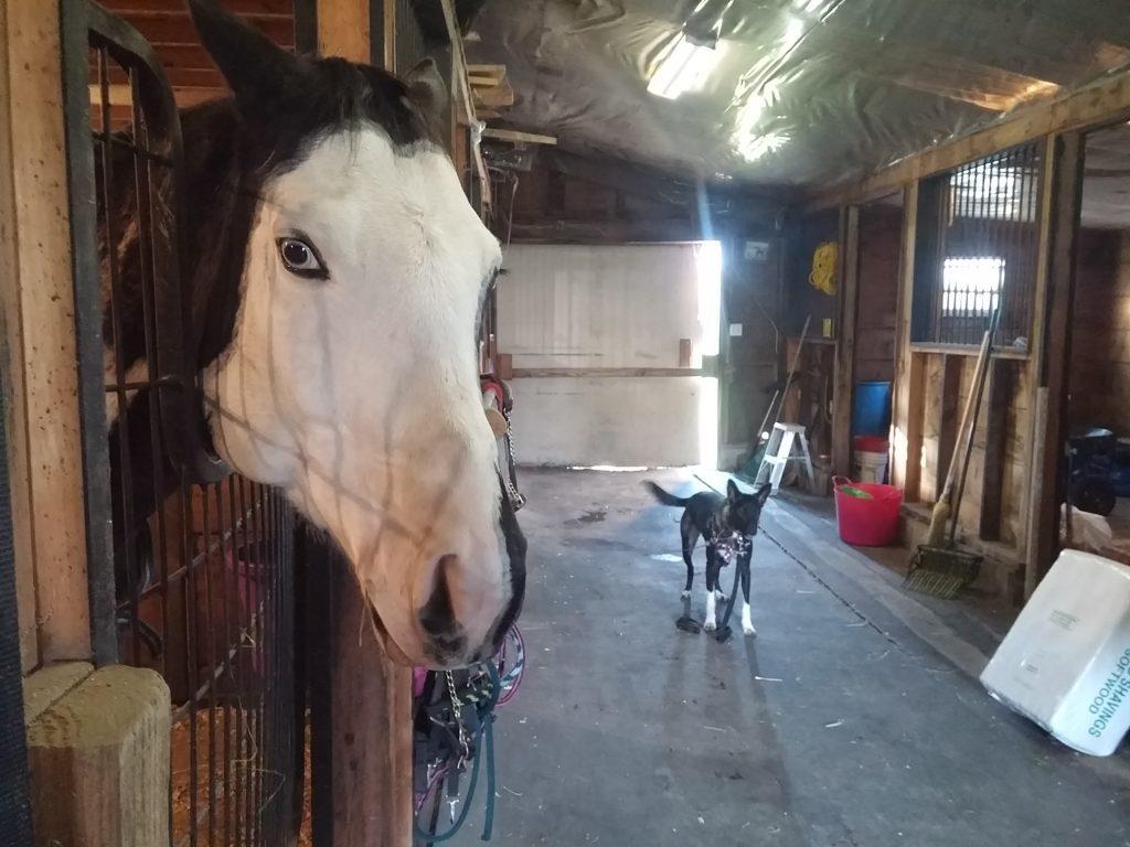 farm horse care