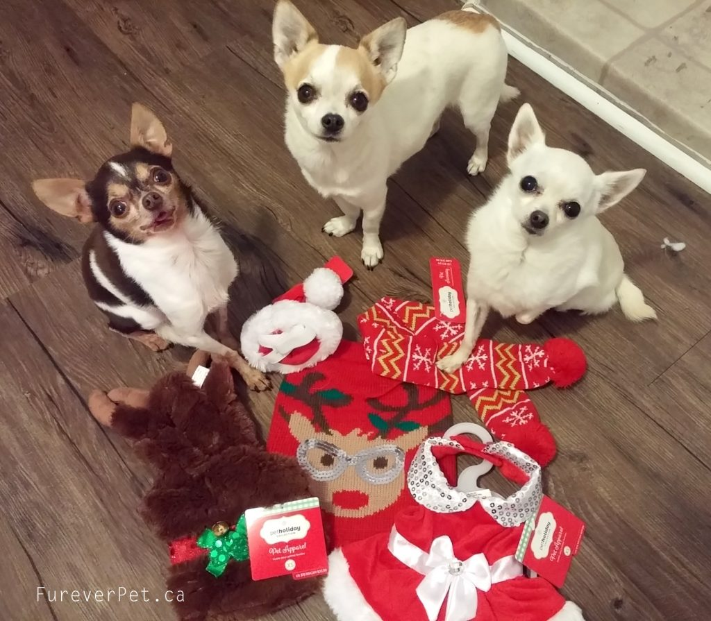 santa paws christmas outfits