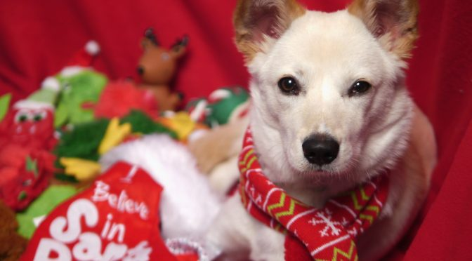More Santa Paws Holiday Dogs