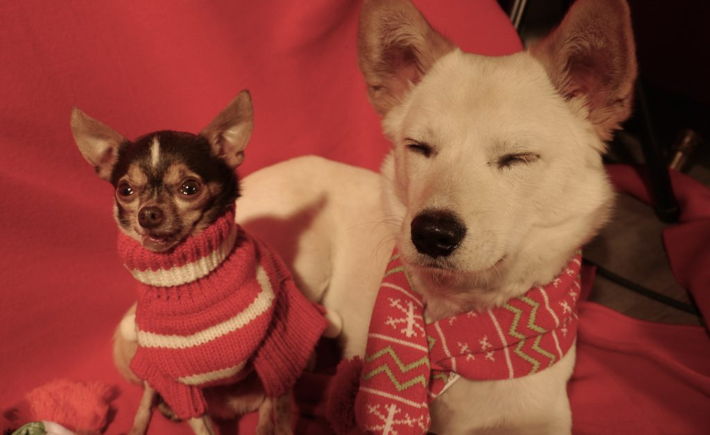 two holiday dogs