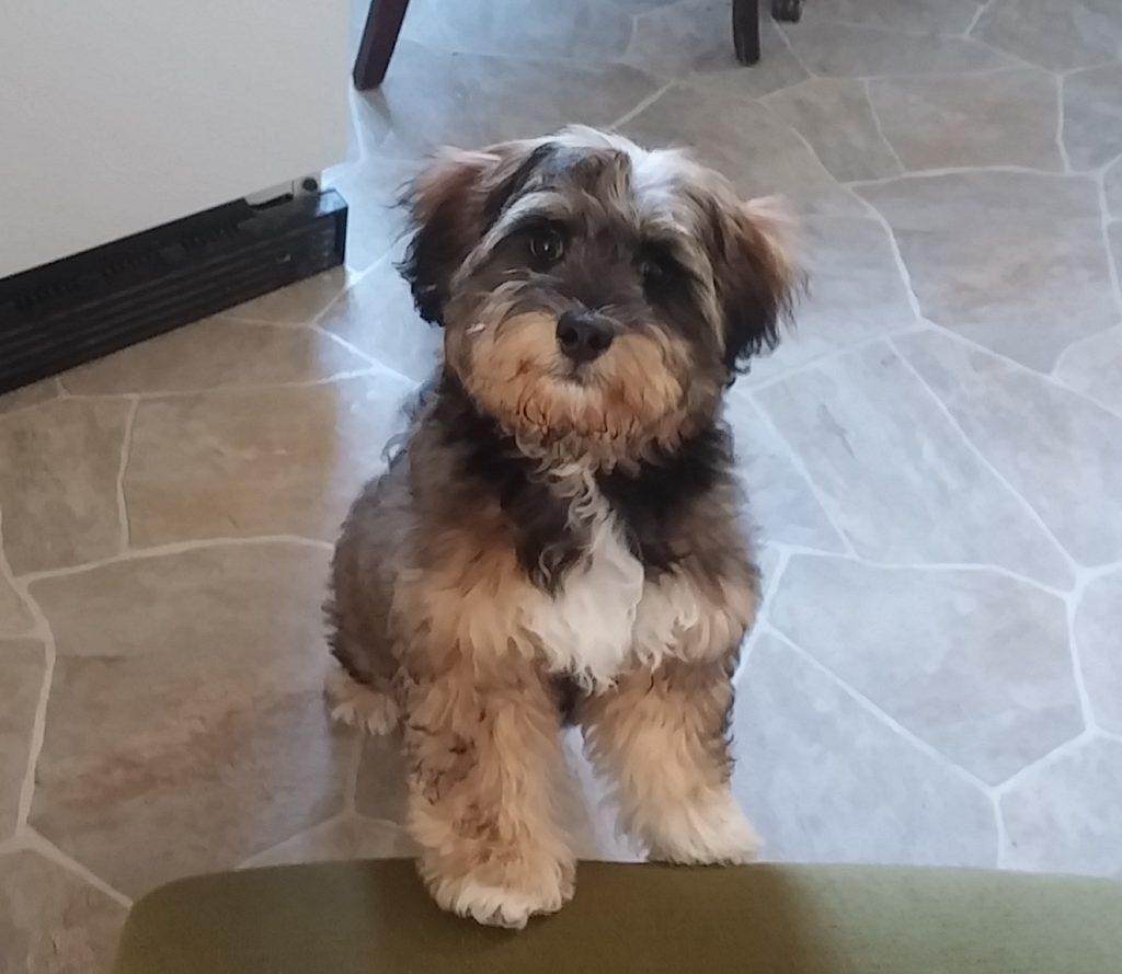 prop puppy petsitting