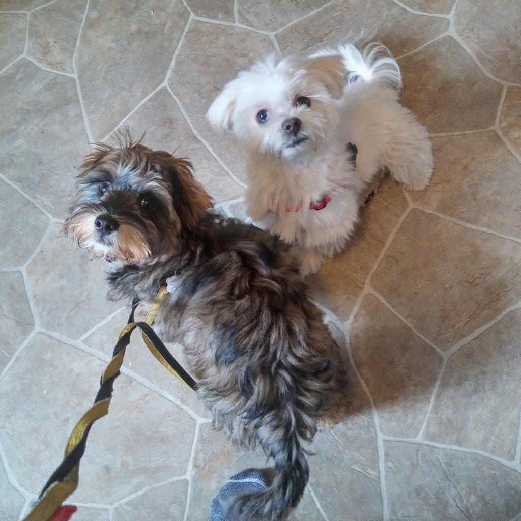 play puppy petsitting