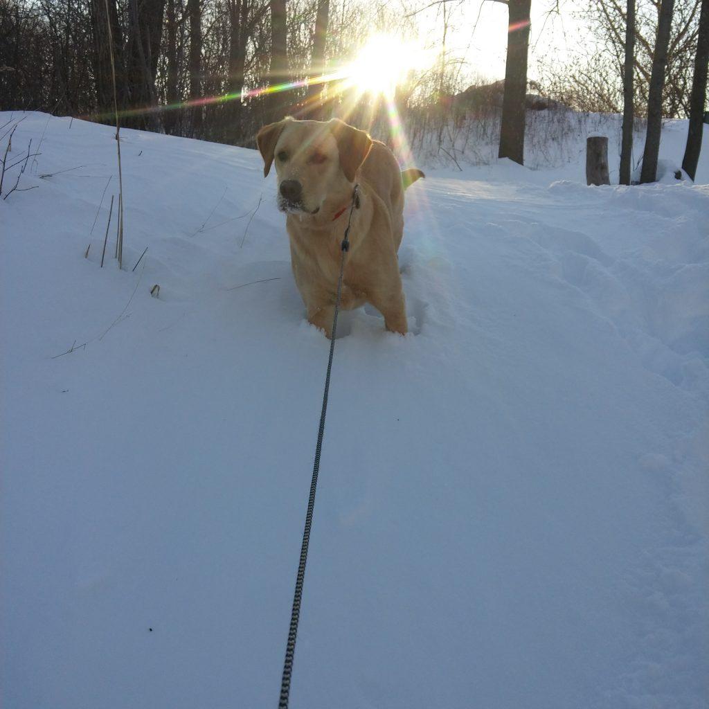 Sunshine pet home visits