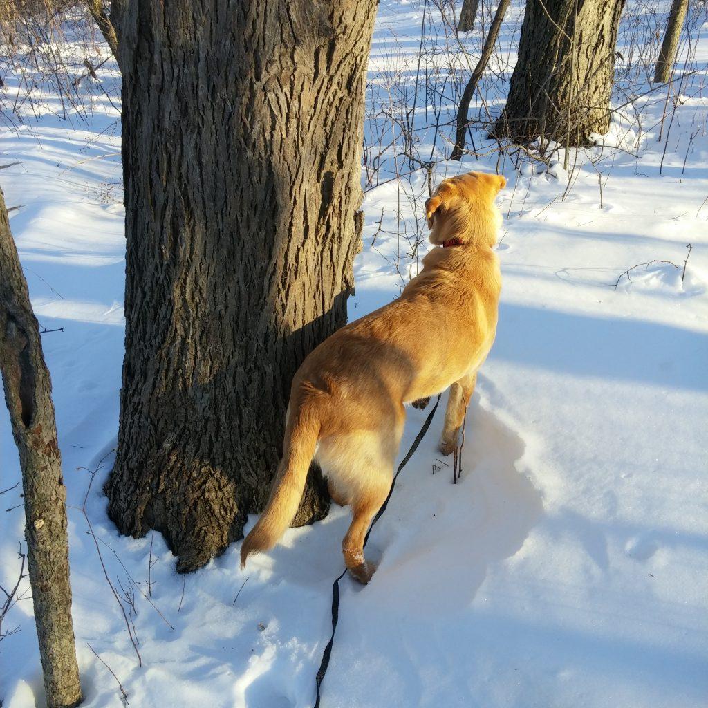 trail hike pet home visit