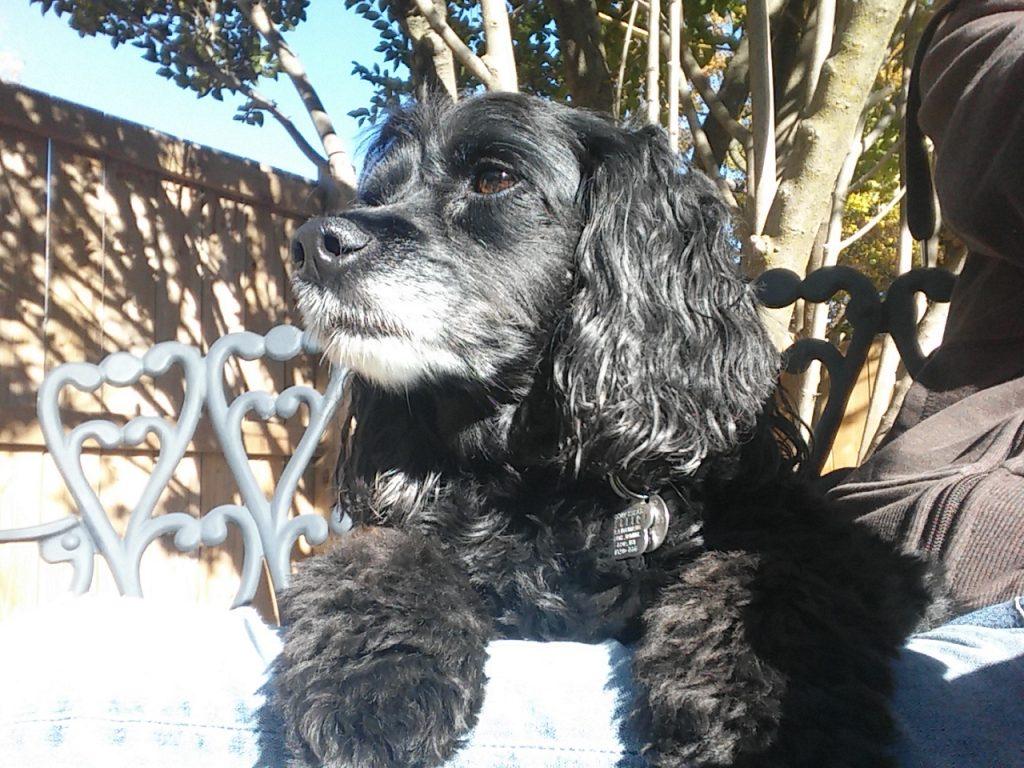 dog boarding kelsey