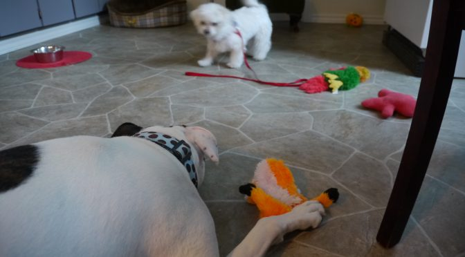 Dog Empathy, Jolene's Heart Warming Meeting with Puppy Oscar