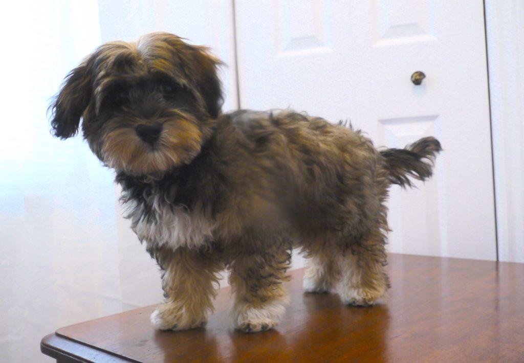 puppy petsitting pose