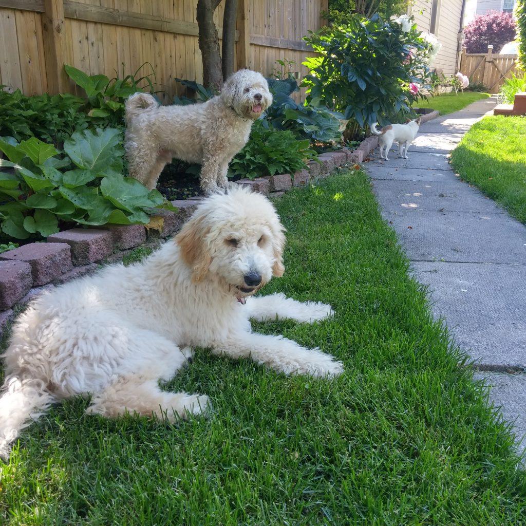 dog daycare Minnie Lucky