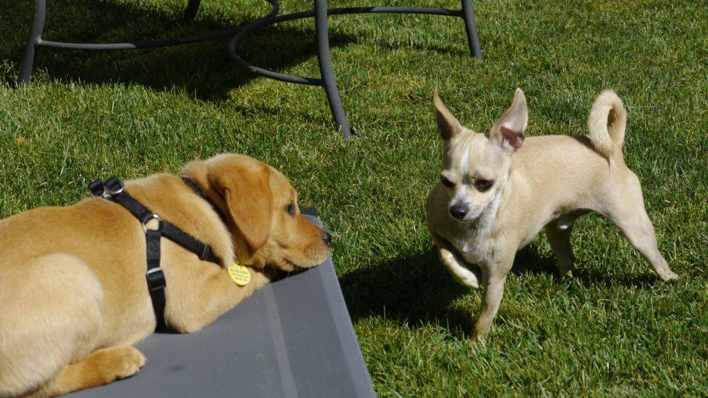 dog daycare bonus jack ben