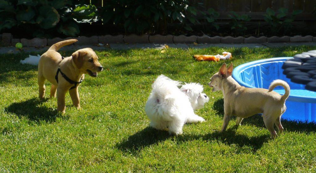 dog daycare bonus sharing romps with Oscar.