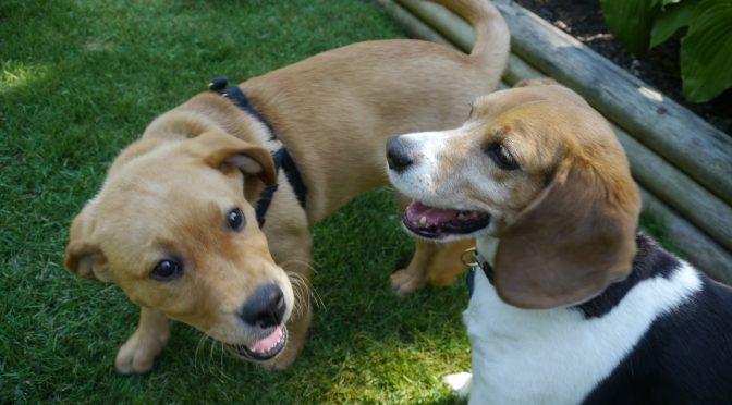 Lady Beagle Finley Review