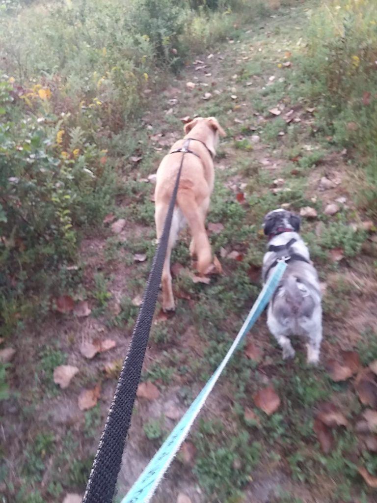pet parent review walkies