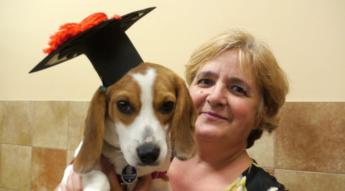 Four Dog Training Grad Classes