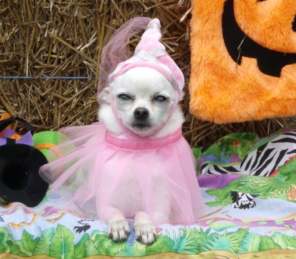 dog halloween jill princess