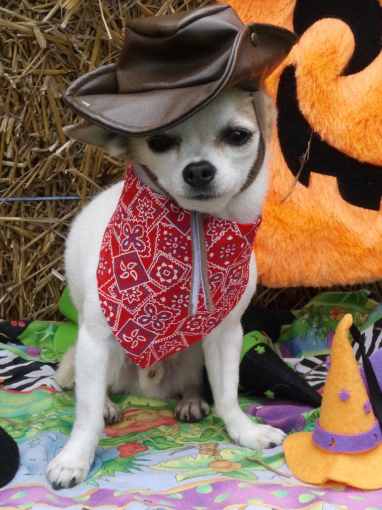 dog halloween mcgee cowboy