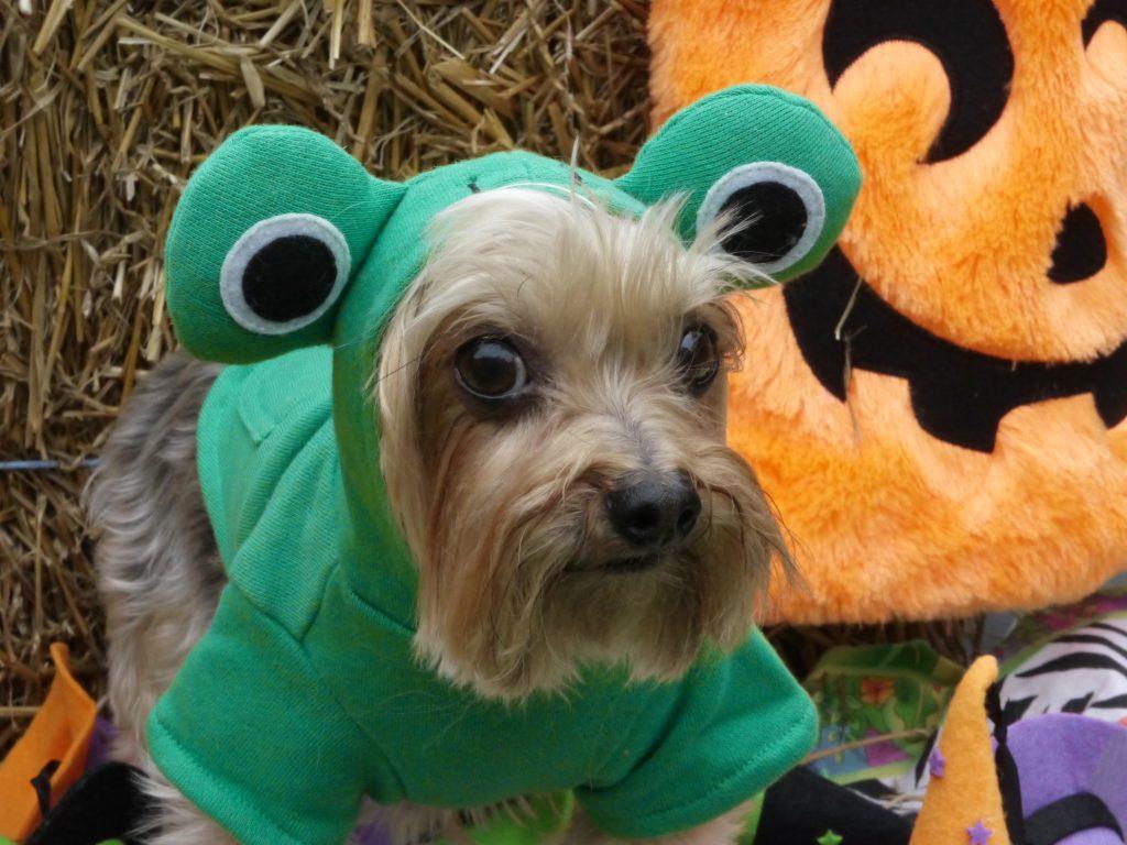 teddy frog dog halloween