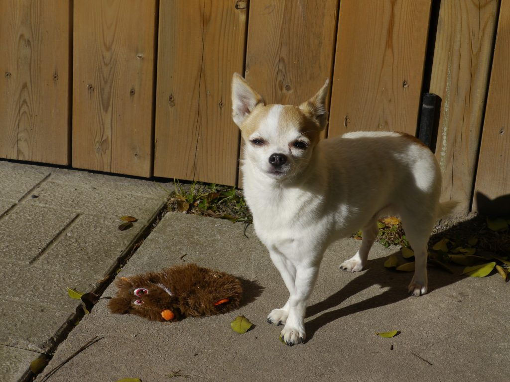 dogs sun november