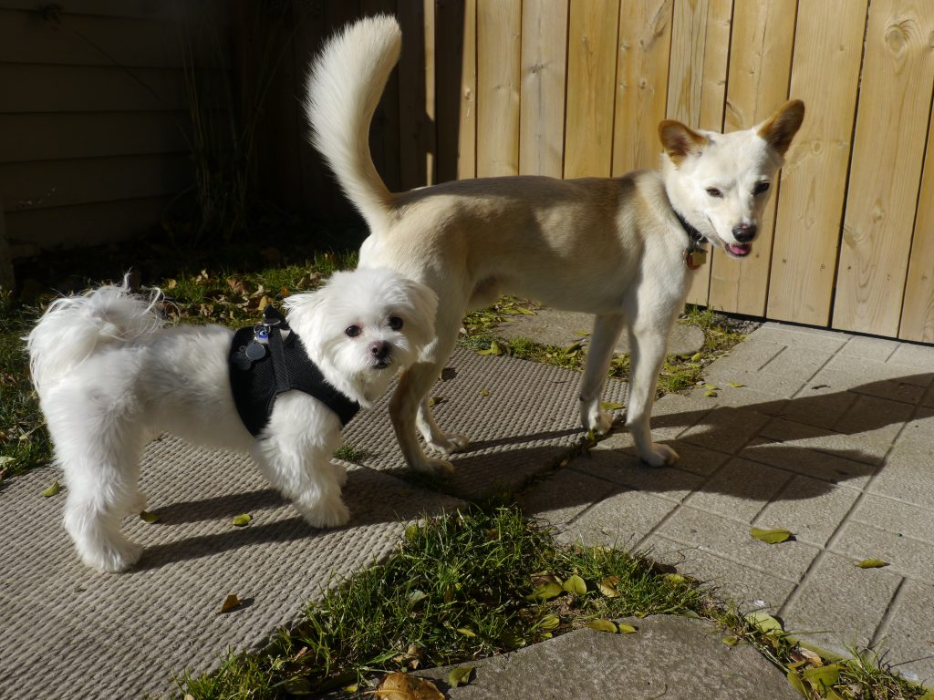 dog daycare november sun
