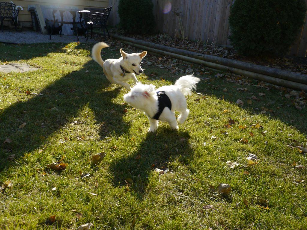 november sun dogs