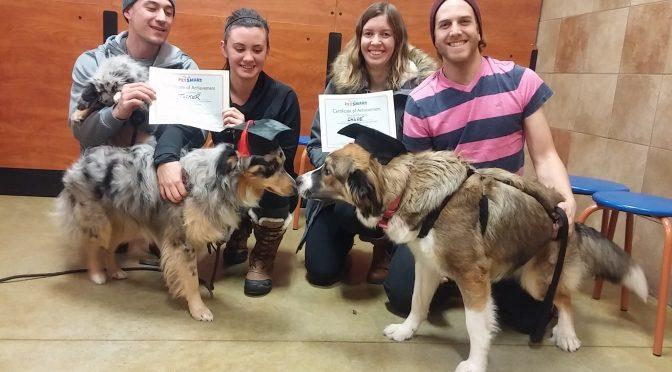 Dog Training Graduate Round Up