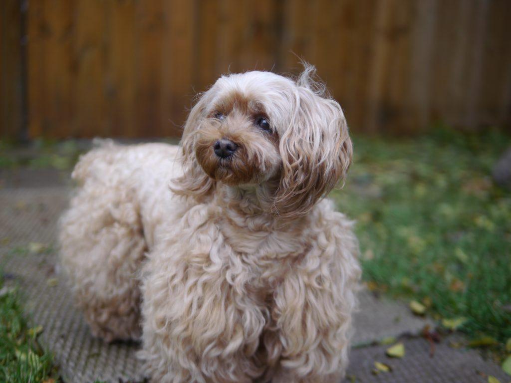 dog portrait watcher