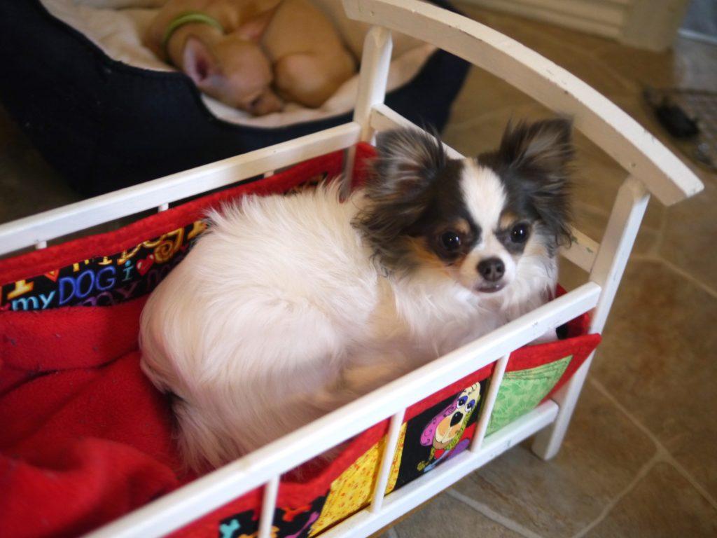 sister doggie daycare