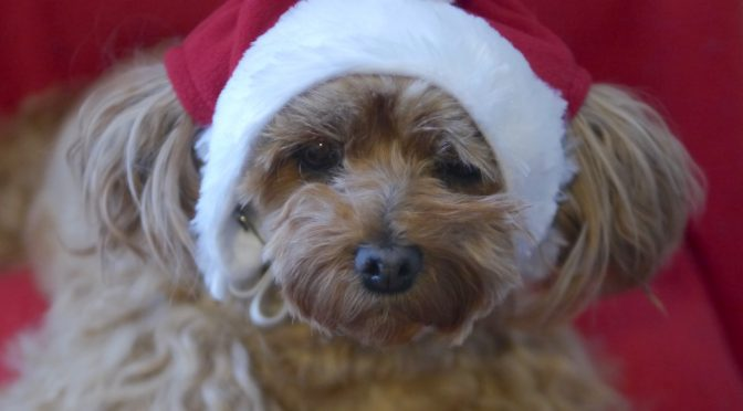 Doggie Christmas Hat Holiday
