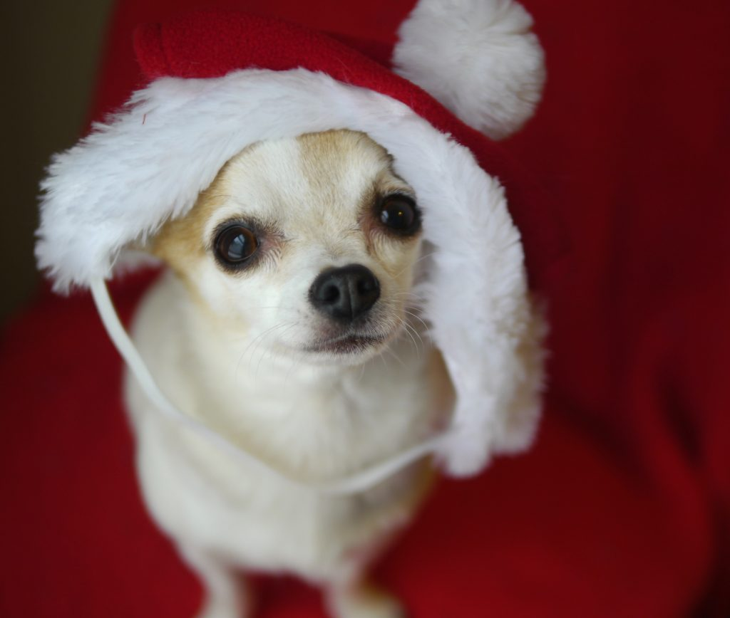 doggie christmas hat mcgee
