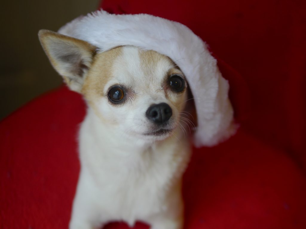 doggie christmas hat mcgee 2