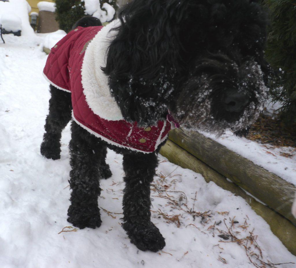 dogs winter canada