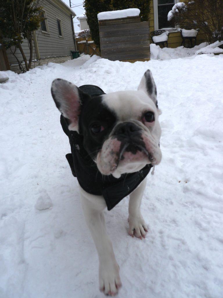 frozen dogs in winter