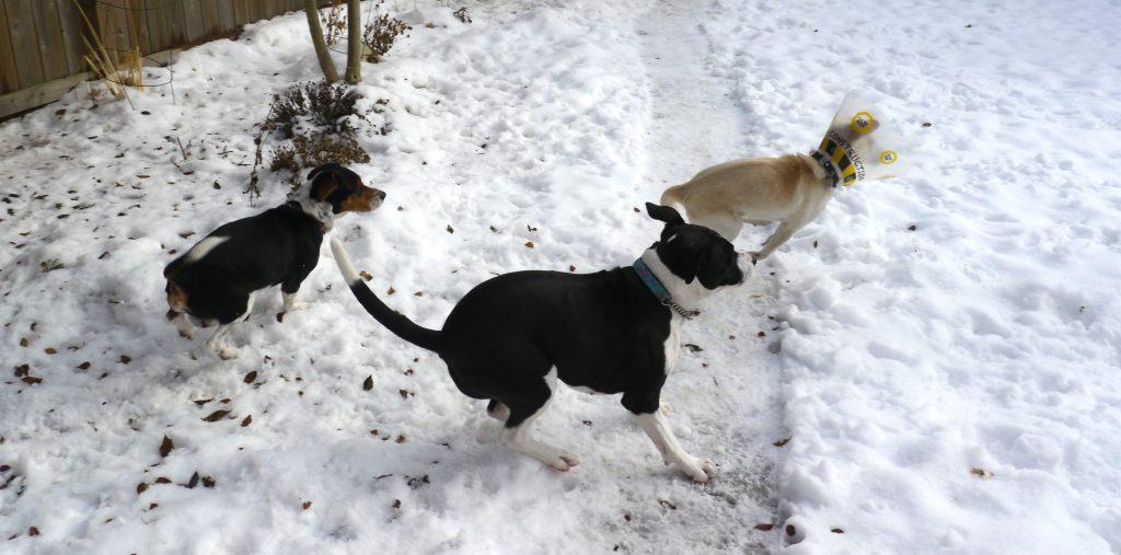 dog play winter