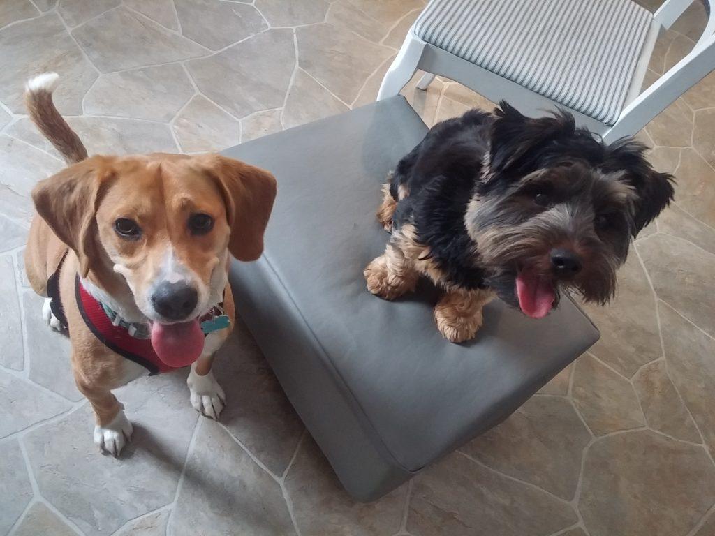 beagle rescue takes picture