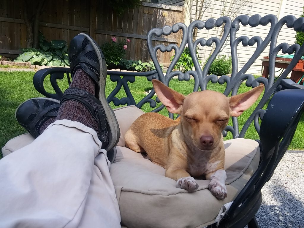 chanel chihuahua bliss summer