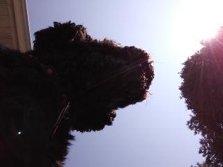 Lucky silhouette dog photography