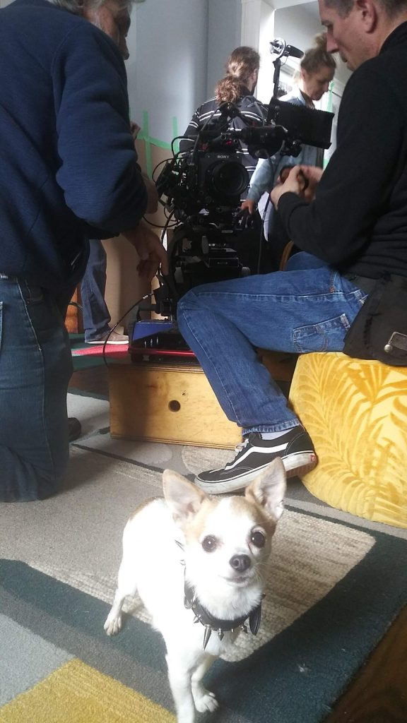 dogs in commercials on set