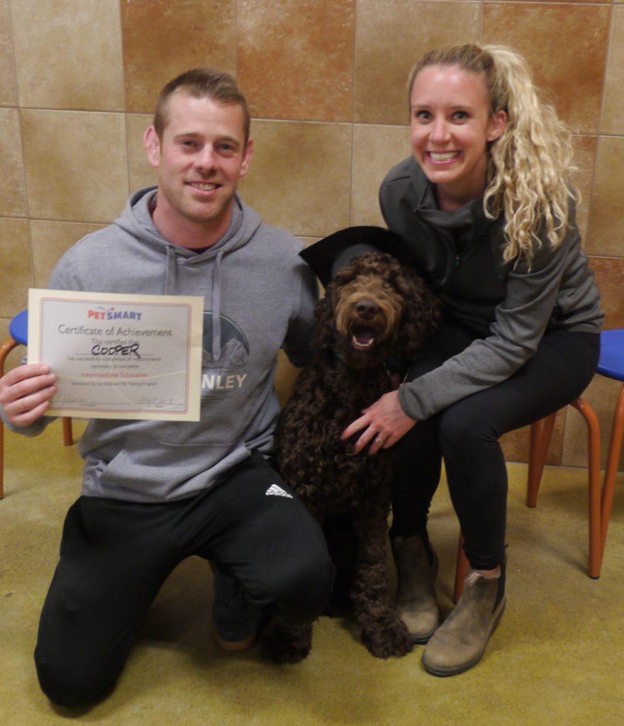 dog training labradoodle cooper