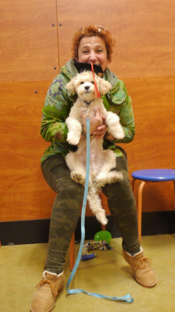 dog training turkish dog