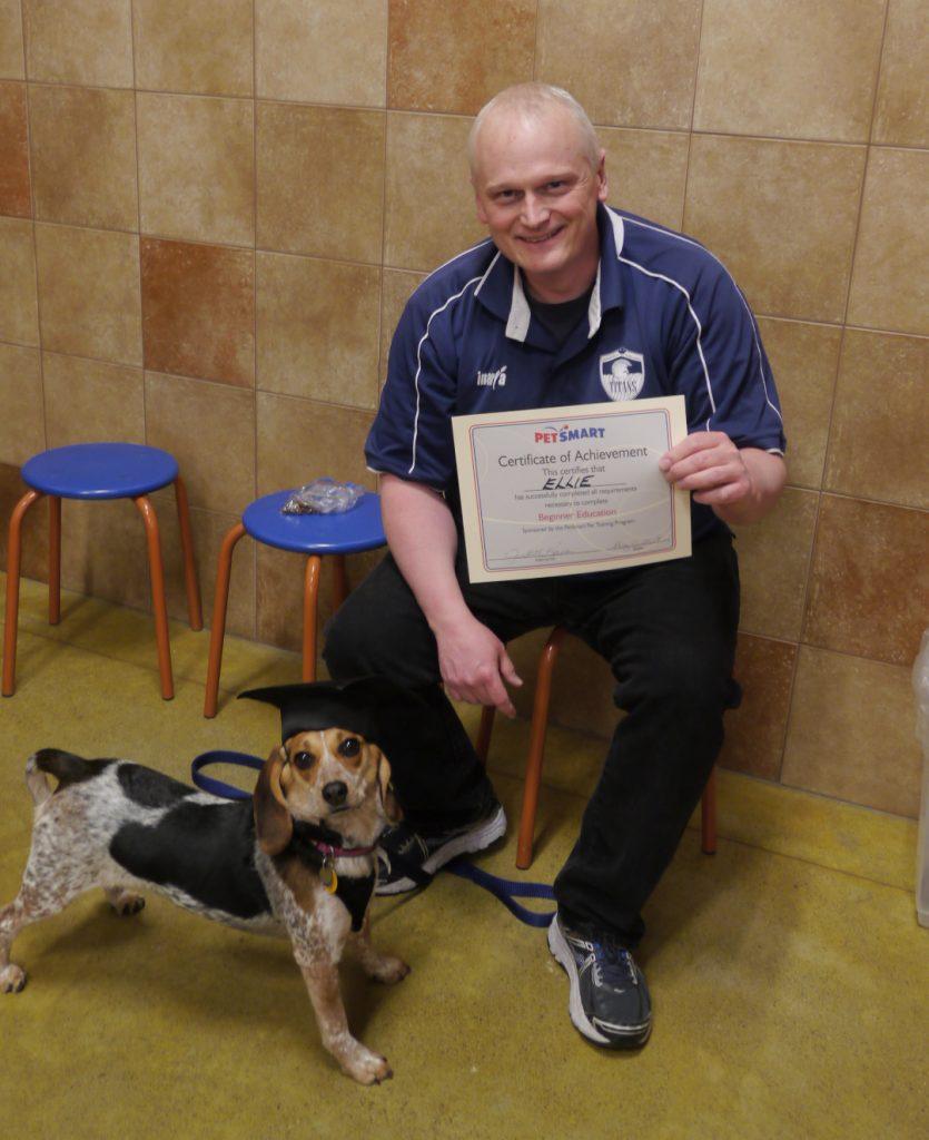 dog training beagle