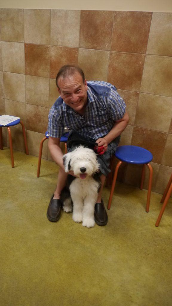 dog training old english sheepdog