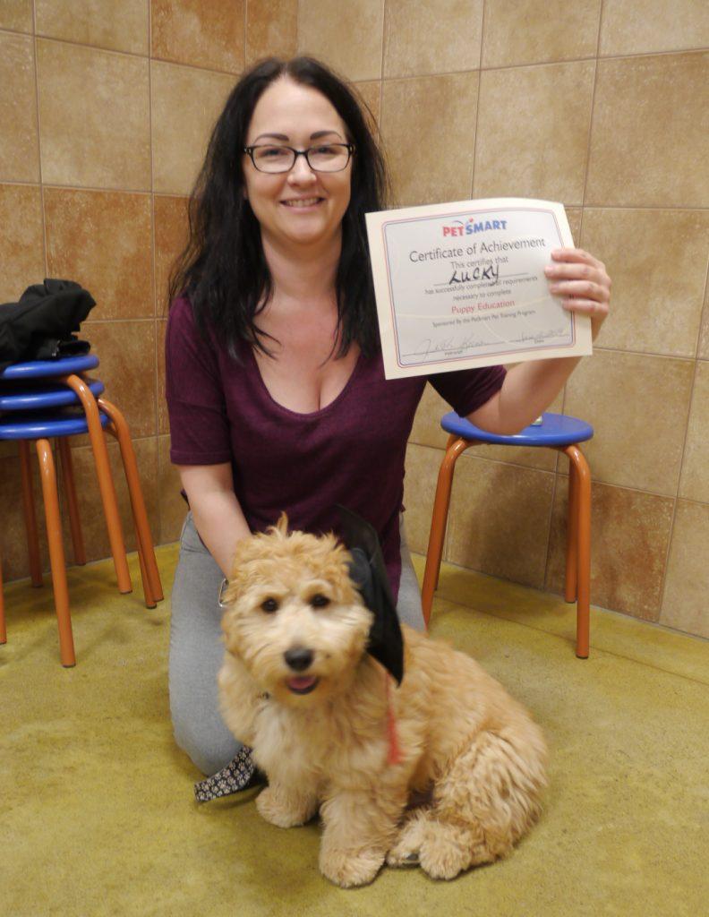 dog training labradoodle