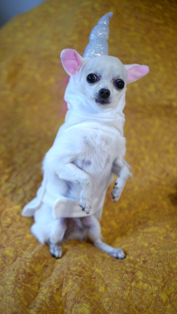 scary unicorn dog costume