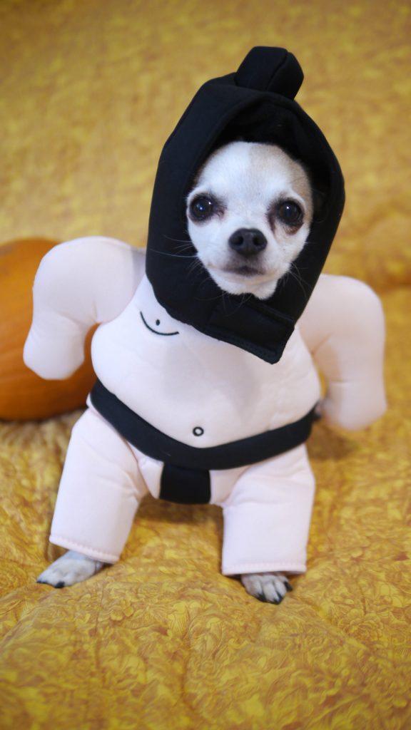 halloween dog costumes 2019