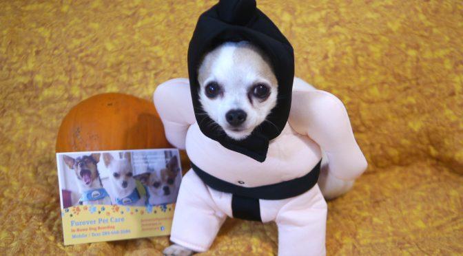 2019 Halloween Dogs